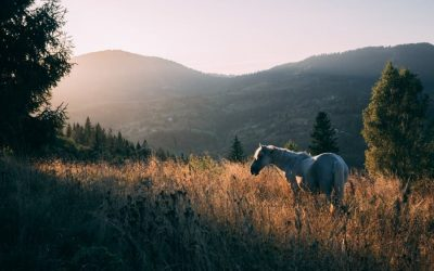 list of important horse grooming tools