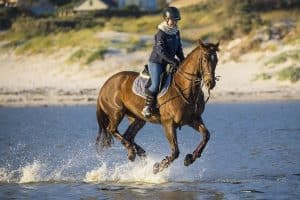 essential horseback riding tack