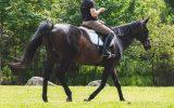 sizing a horseback riding helmet