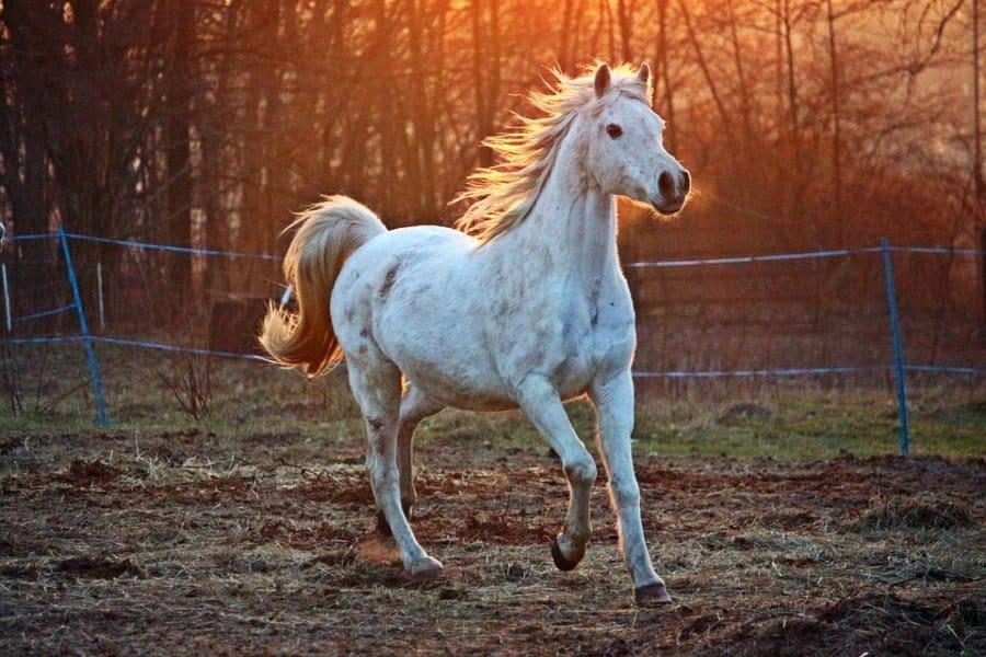 horse joint basics
