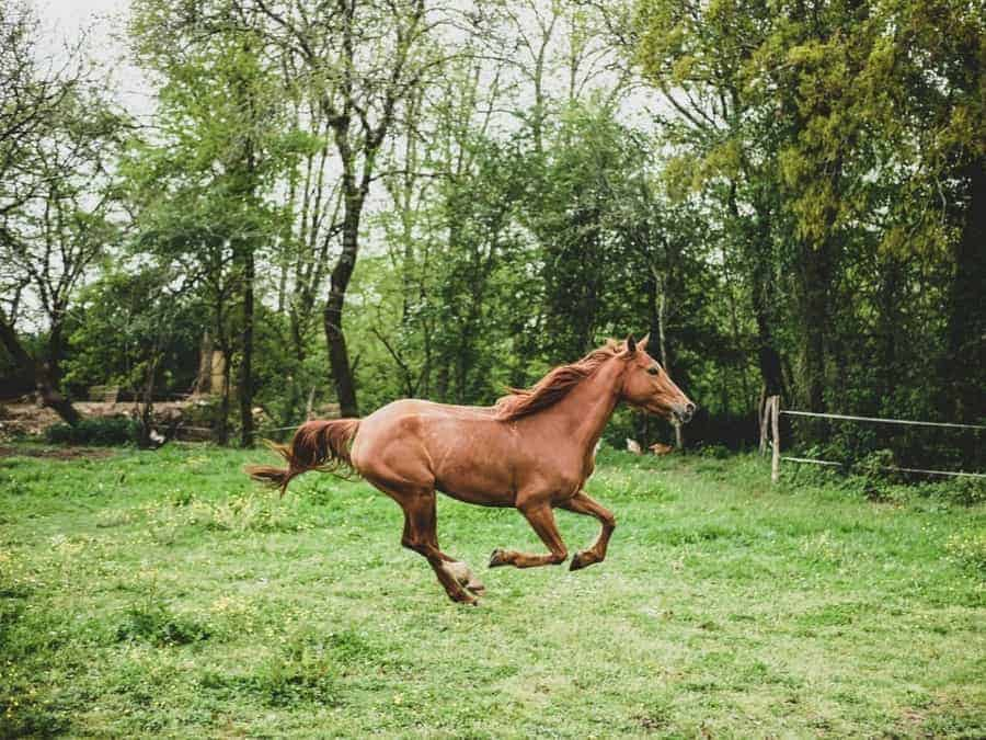 hyaluronic acid and equine joint health